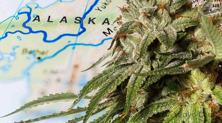medical marijuana card alaska