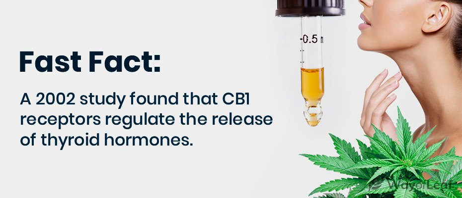 cbd oil thyroid