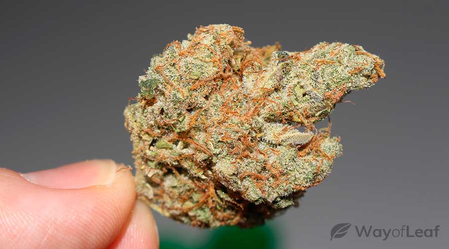 marijuana-strains-for-sleep-apnea