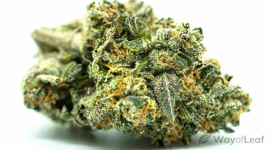 maui-wowie-marijuana
