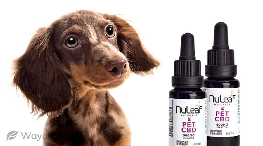 what about nuleaf naturals' cbd oil for pets?