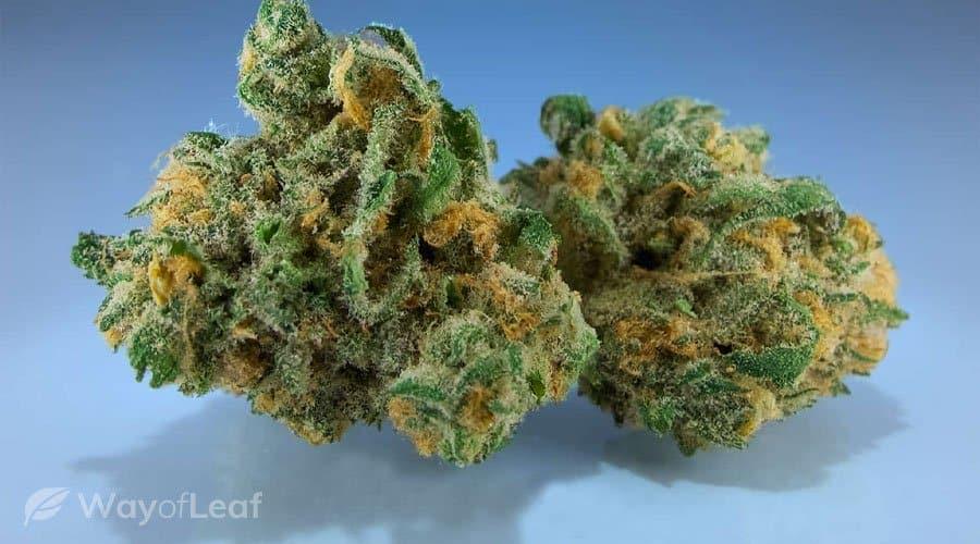 Cannabis Strain #2 - Blue Dream