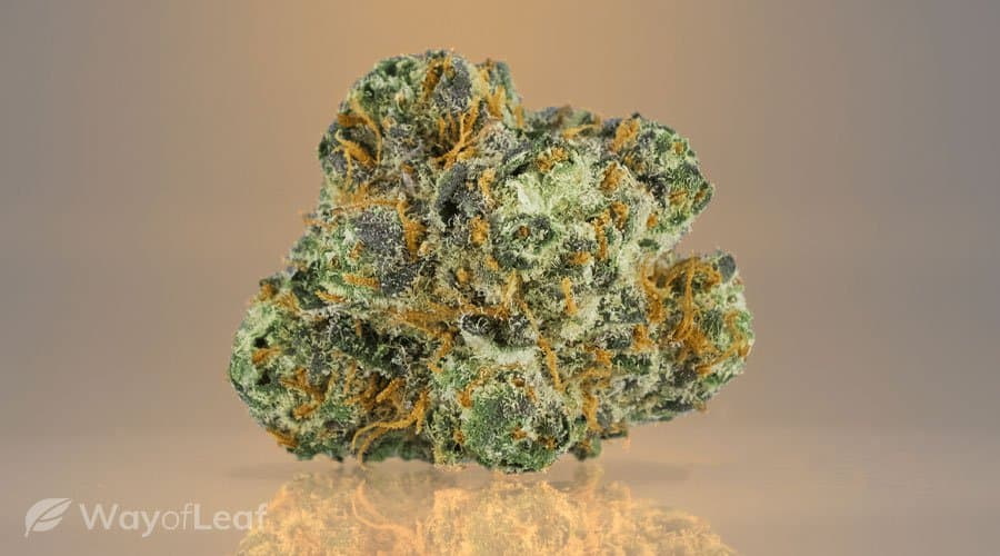 cannabis-strain-3-bubba-kush