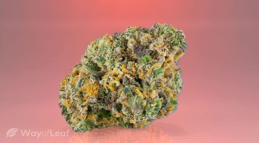 Cannabis Strain #4 - AK-47