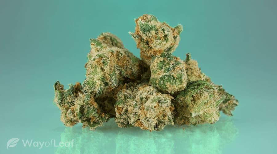 cannabis-strain-5-jack-herer