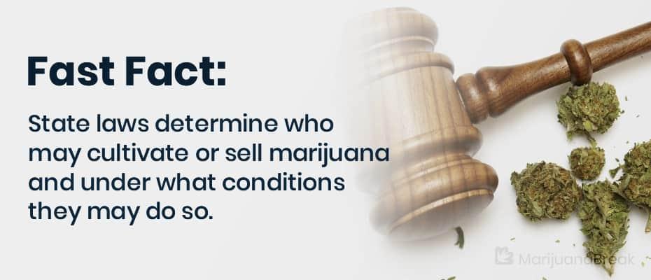 medicinal marijuana growers license