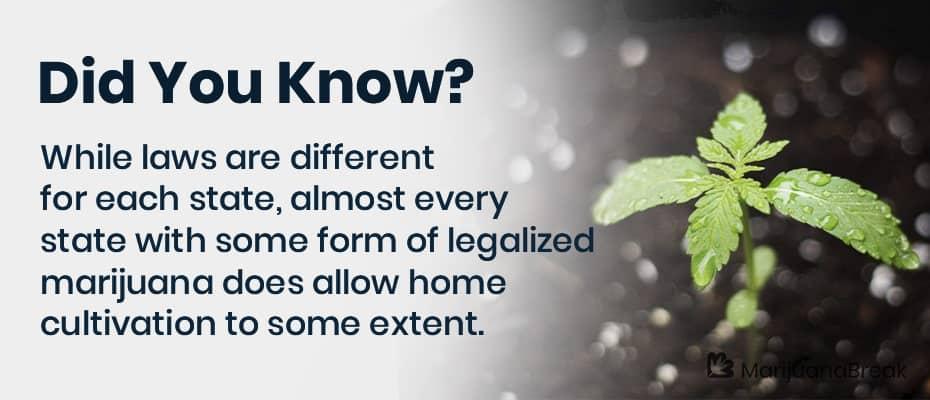medical marijuana grow license