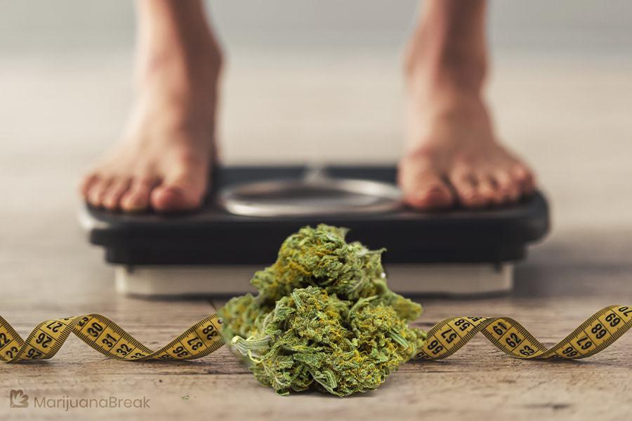 marijuana weight gain