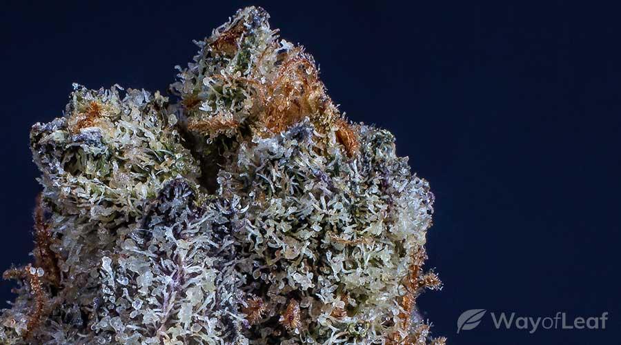 ancient-cannabis