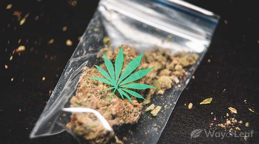 white-99-cannabis-strain