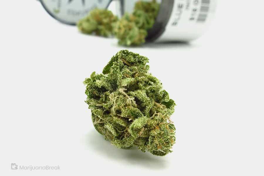 blue-magoo-the-marijuana-strain-with-the-memorable-name