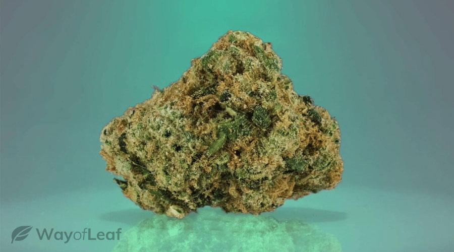 2 – Chemdawg (The Pungent Marijuana Strain)