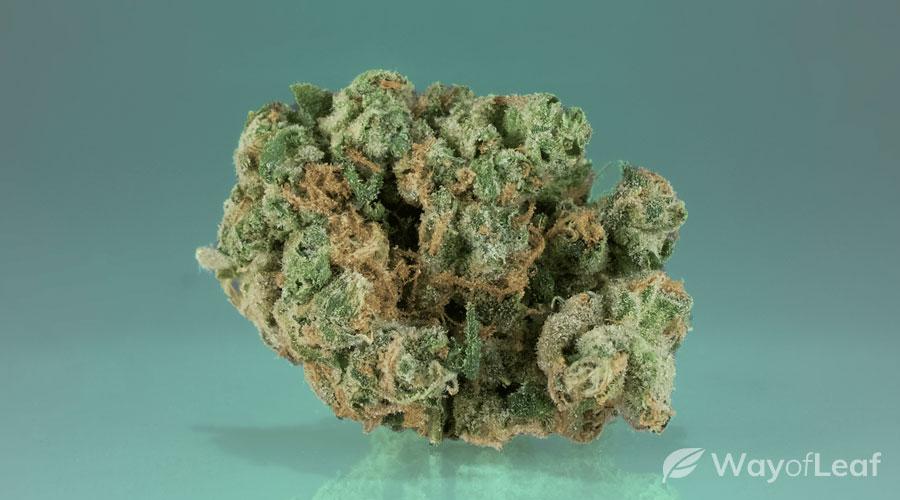 2) sour og (hybrid marijuana strain)