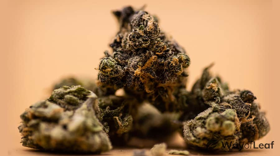 blue dream: aroma, flavor, and appearance