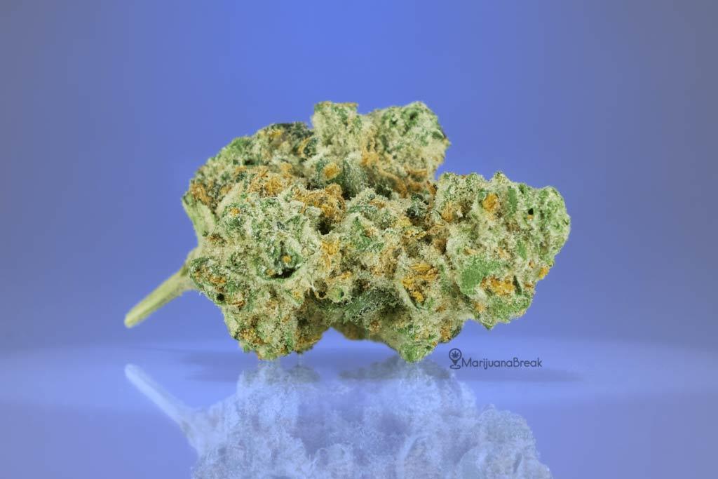 Amnesia Haze Cannabis Strain