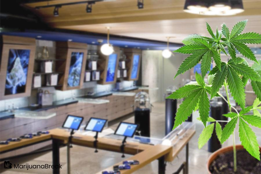 Medithrive Is Not Just a Cannabis Shop