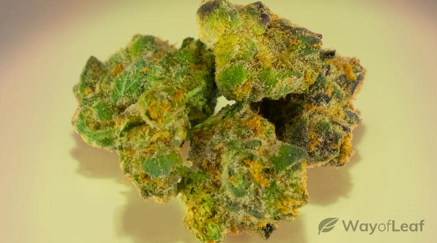 medical benefits of the girl scout cookies strain