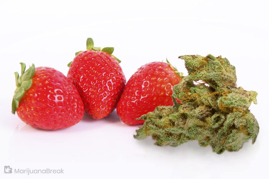 History of Strawberry Diesel Marijuana Strain
