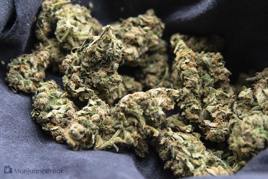 marijuana strain guide