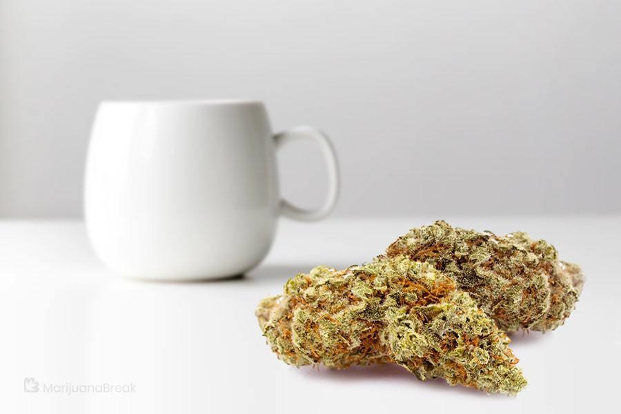 red dragon cannabis