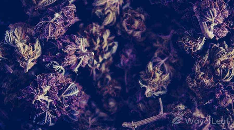 bubbashine-strain