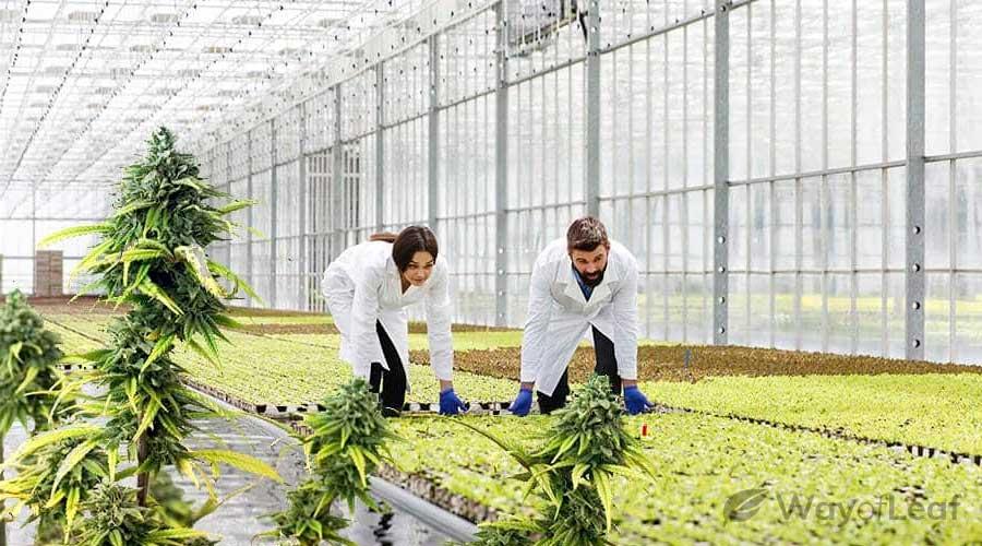 sustainable-hemp