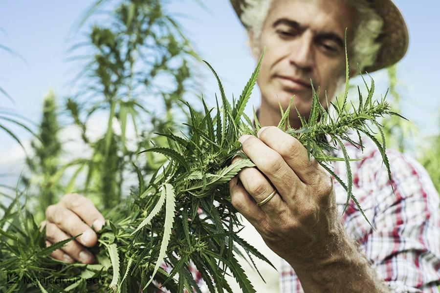work in the marijuana industry
