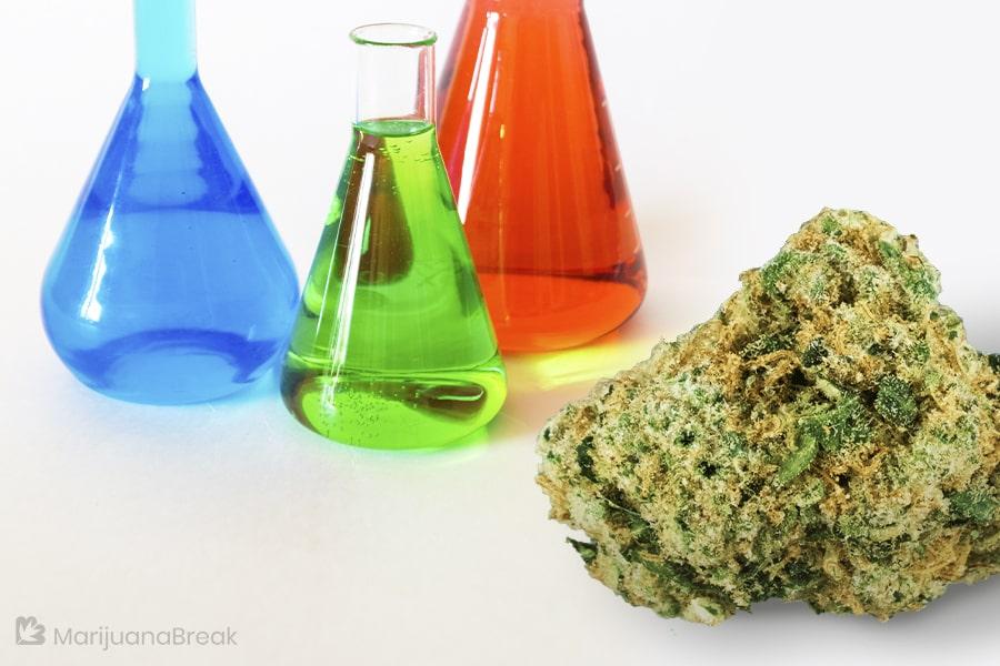 chemo cannabis seeds