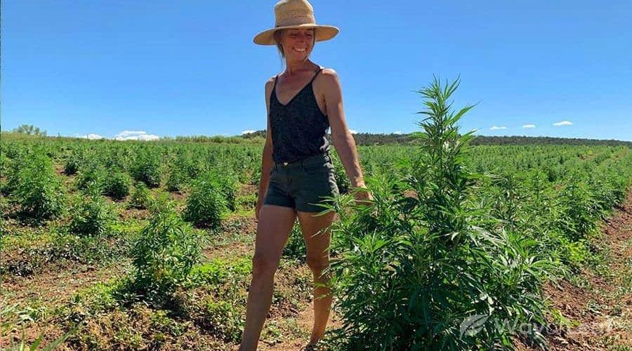 Welltiva CBD: Sustainable Hemp Farming Practices in Colorado