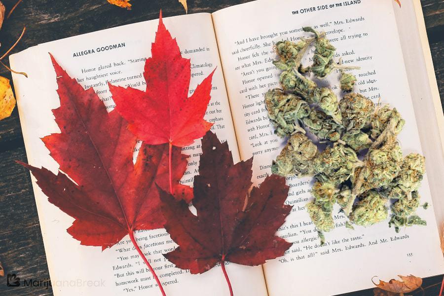maple leaf indica cannabis