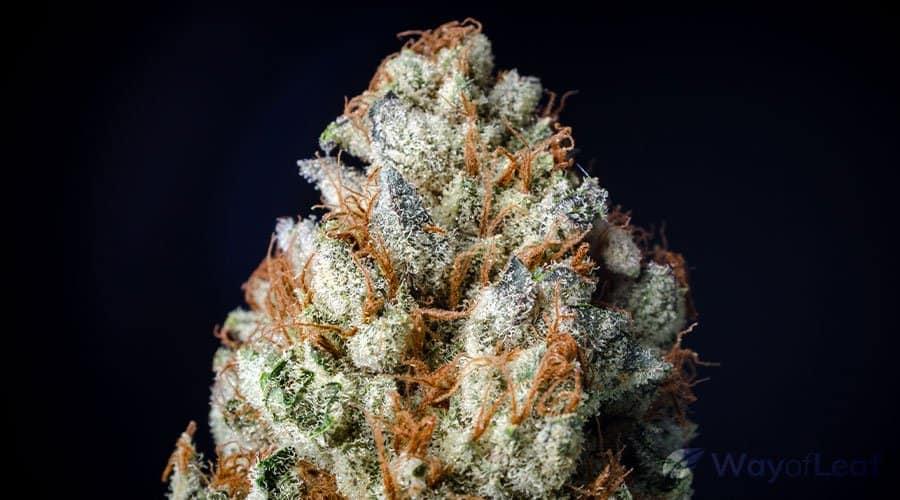 best-new-weed-strains