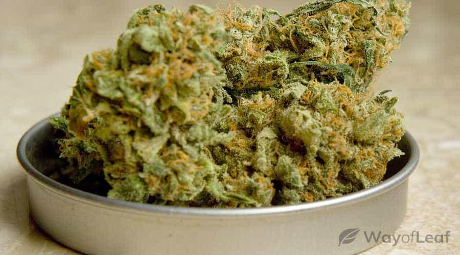 cannabis-strains-for-edibles
