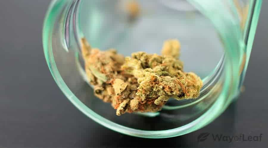 what-cannabis-strains-smell-like-citrus