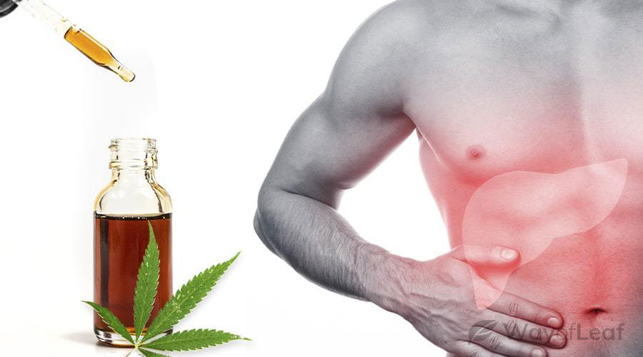 CBD's Effect on the Liver