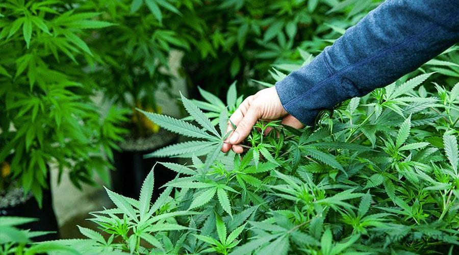 medical marijuana card washington state