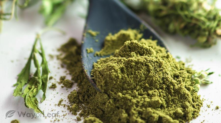 What Is CBD Protein Powder?