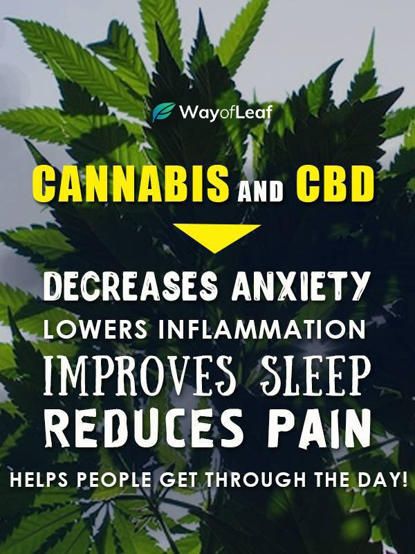 cbd oil: what is cbd oil, how it works and what is it used for