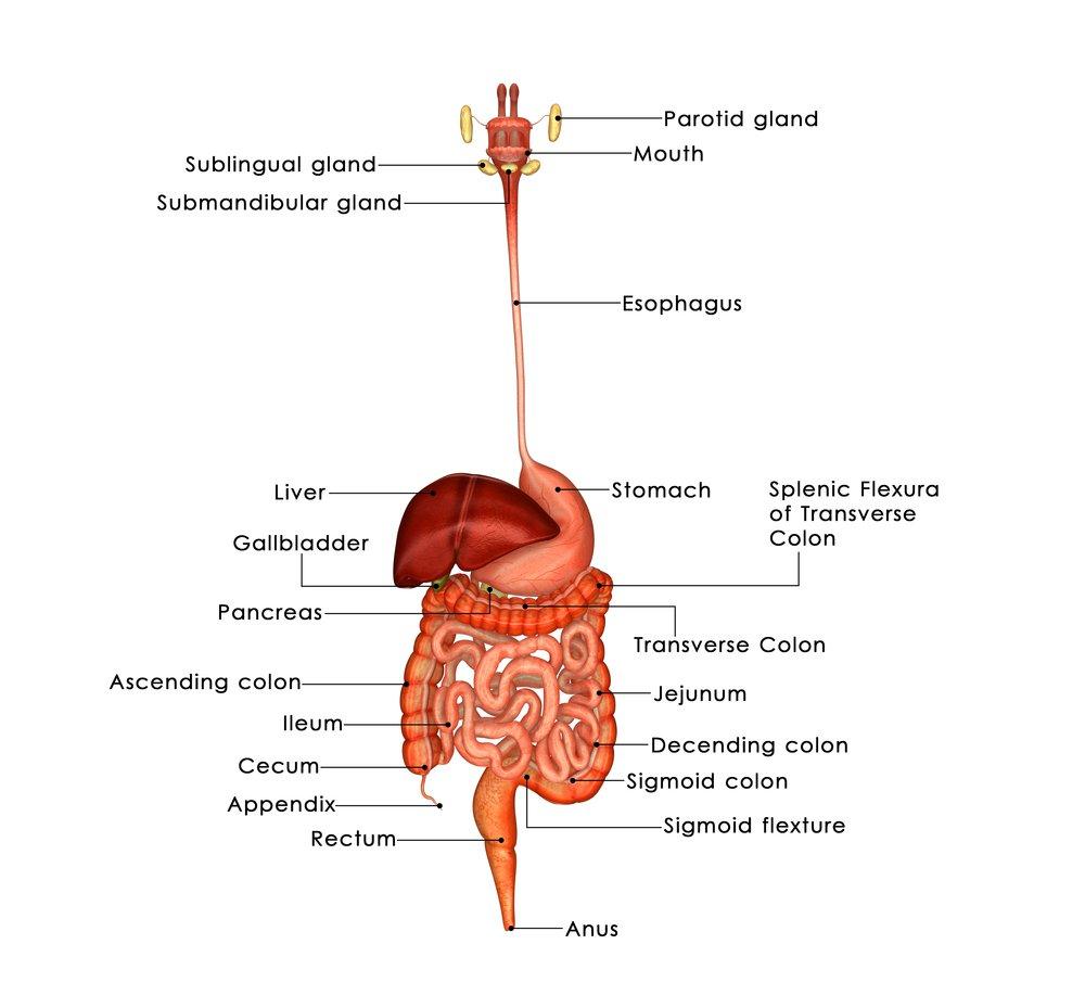 marijuana strains for gastrointestinal pain
