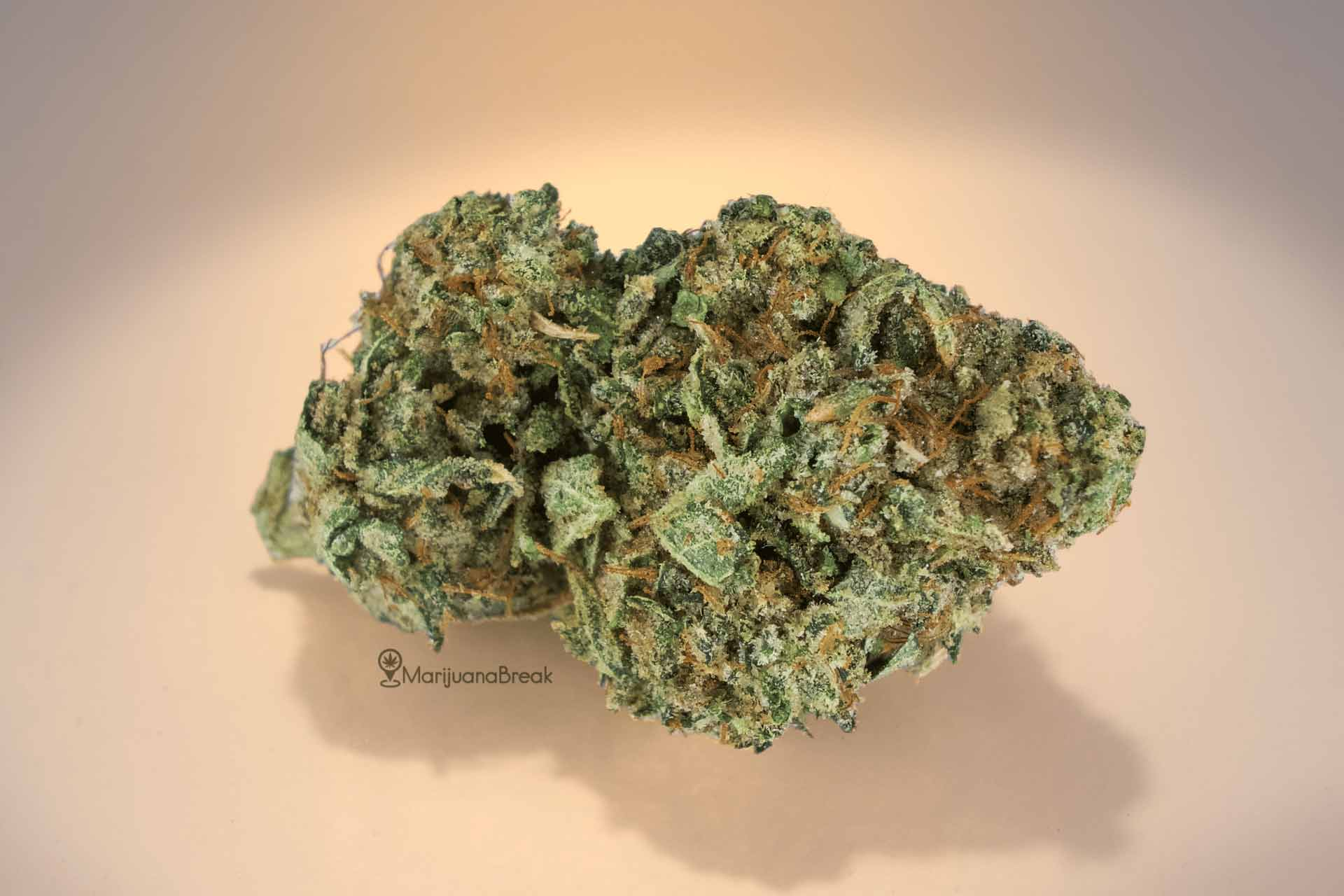 sunset sherbet cannabis strain review