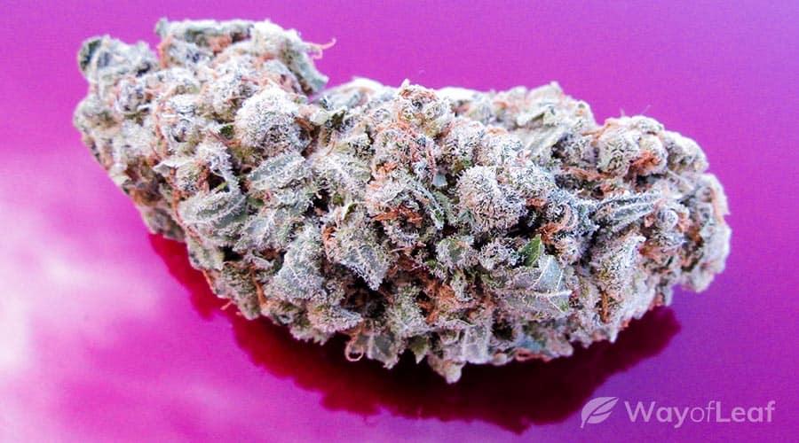 best-marijuana-strains-for-creativity