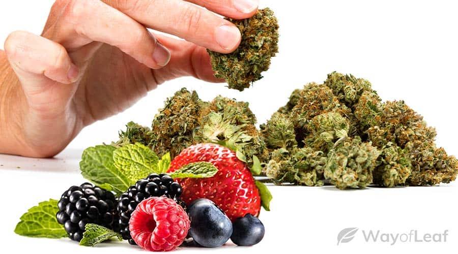 berry-flavor-strains