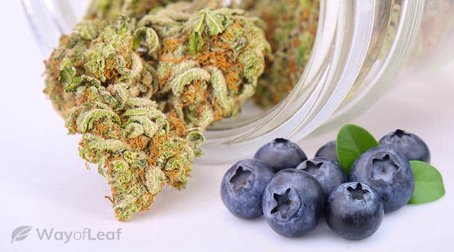 strain-berry-flavor