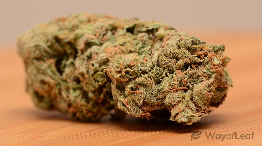 small-cannabis-plant