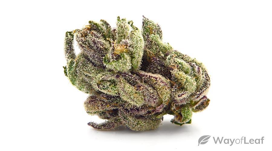 small-marijuana-plants