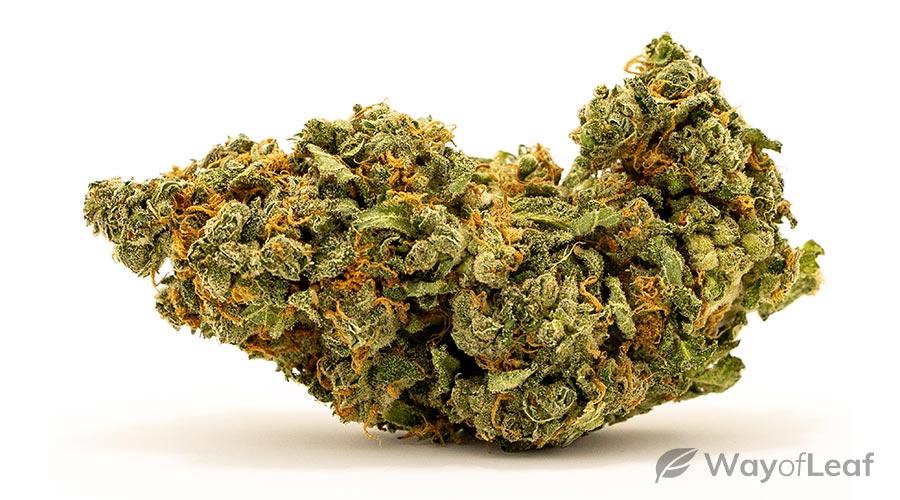 smallest-marijuana-plant
