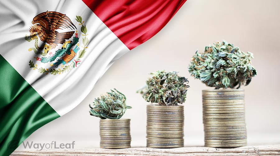is-recreational-weed-legal-in-mexico