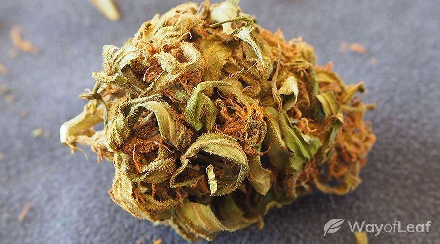 award-winning-marijuana-strains