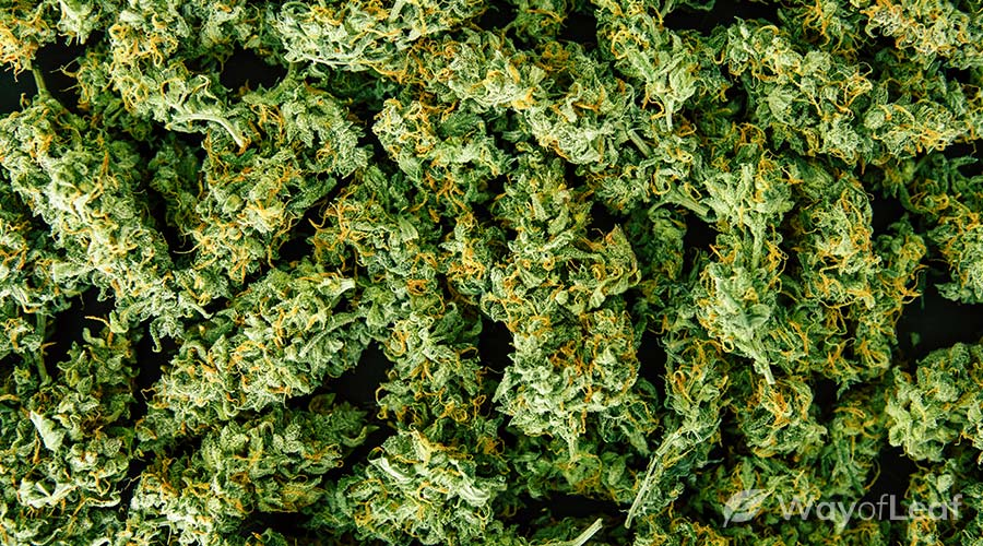 oaxacan-gold-strain