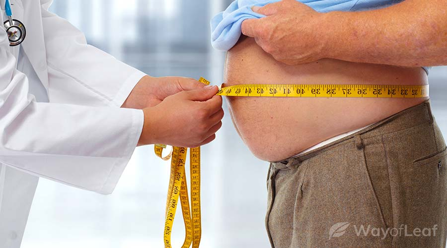 cbd-and-obesity
