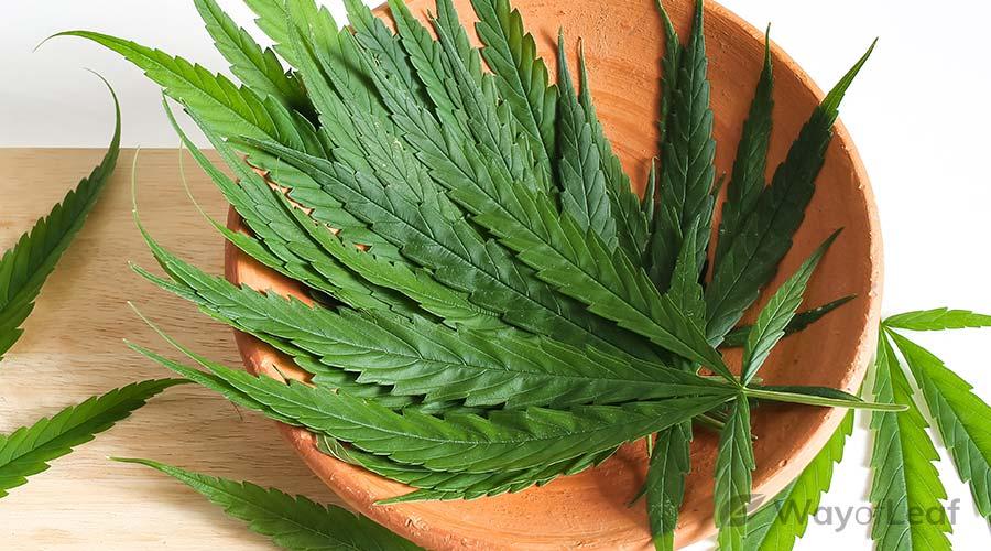 marijuana-crockpot